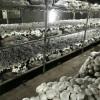 فروش کارخانه قارچ 540 تنی
