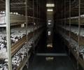 فروش کارخانه قارچ در بویین زهرا