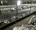 فروش کارخانه قارچ 540 تنی در سلفچگان