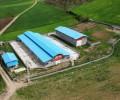 فرش دامداری مجوزدار دام سبک و سنگین در مازندران