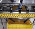 فروش کارخانه فعال مایع سفیده تخم مرغ پاستوریزه در اصفهان