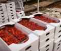 فروش گلخانه در کرج