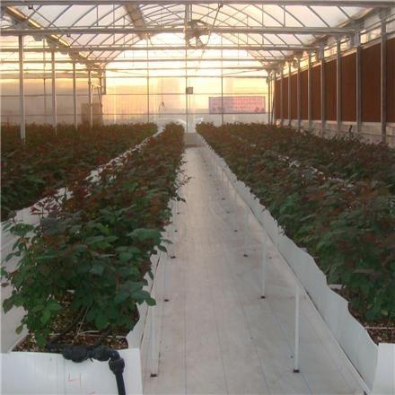 فروش گلخانه با تجهیزات اسپانیایی