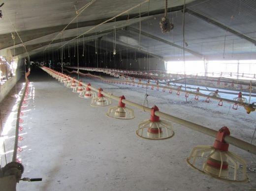 فروش مرغداری 12 هکتاری در کرج